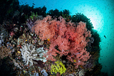 ETH400483U © Stocktrek Images, Inc. Soft corals and invertebrates grow on a deep reef in  Indonesia.