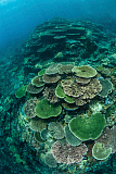 ETH400543U © Stocktrek Images, Inc. Healthy reef-building corals thrive in Komodo National Park, Indonesia.
