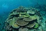 ETH400544U © Stocktrek Images, Inc. Healthy reef-building corals thrive in Komodo National Park, Indonesia.