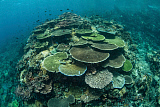 ETH400548U © Stocktrek Images, Inc. Healthy reef-building corals thrive in Komodo National Park, Indonesia.