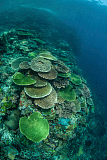 ETH400549U © Stocktrek Images, Inc. Healthy reef-building corals thrive in Komodo National Park, Indonesia.