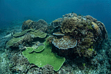 ETH400551U © Stocktrek Images, Inc. A healthy coral reef thrives in Komodo National Park, Indonesia.