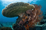 ETH400552U © Stocktrek Images, Inc. A beautiful coral reef thrives in Komodo National Park, Indonesia.