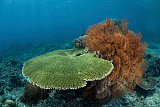 ETH400553U © Stocktrek Images, Inc. A beautiful coral reef thrives in Komodo National Park, Indonesia.