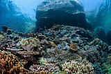 ETH400558U © Stocktrek Images, Inc. A beautiful coral reef thrives on an underwater slope in Indonesia.