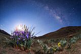 JFD200034S © Stocktrek Images, Inc. A blooming iris flower under the the rising moonlight and Milky Way.