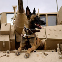 MILITARY WORKING DOGS Stock Photos and Pictures