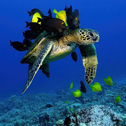 SEA TURTLES Stock Photos and Pictures