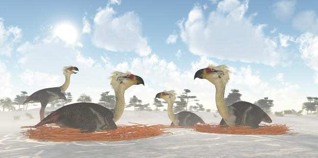 CFR200317P © Stocktrek Images, Inc. A colony of nesting female Phorusrhacos during the Miocene Era.