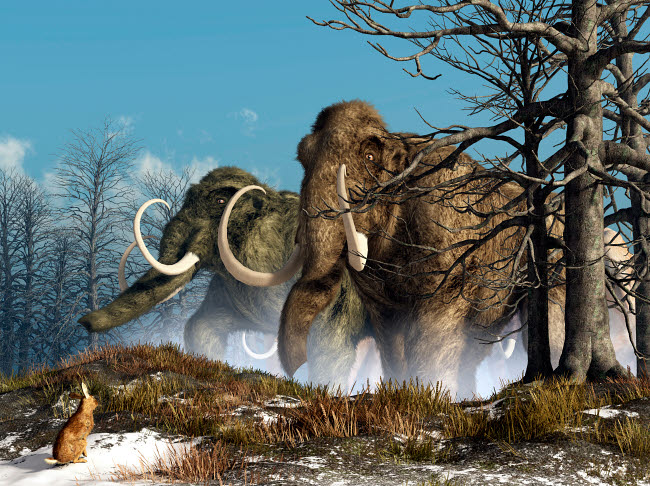 DEK600027P © Stocktrek Images, Inc. A rabbit witnesses a herd of mammoths in a snowy forest.