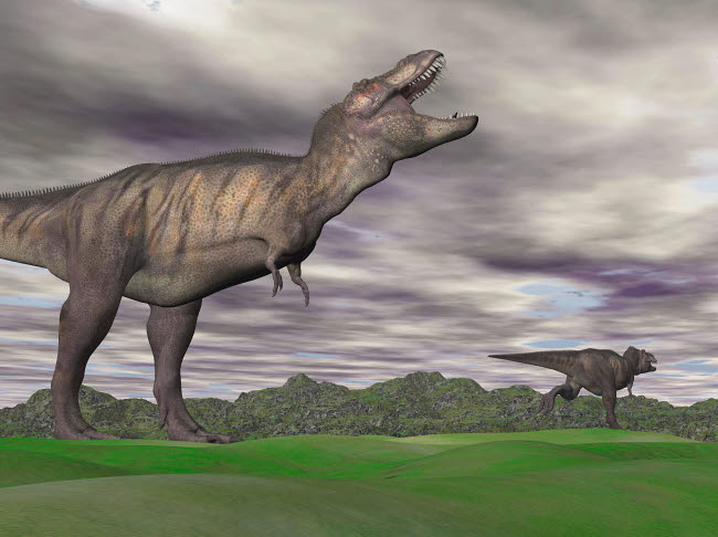 EDV600077P © Stocktrek Images, Inc. Tyrannosaurus Rex growling as a fellow T-Rex runs away.