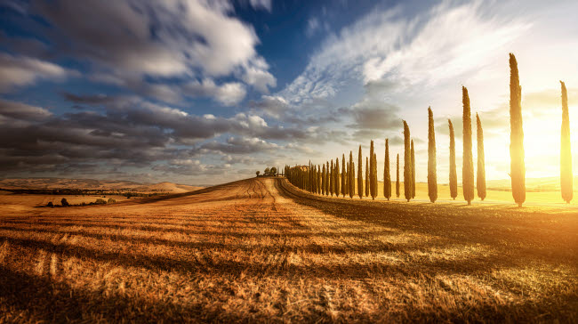 EVK200199S © Stocktrek Images, Inc. Sunset in a golden field with an alley of cypress trees, Tuscany, Italy.