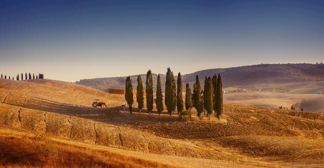 EVK200221S © Stocktrek Images, Inc. Small isle of cypress trees in a field in the evening, Tuscany, Italy.
