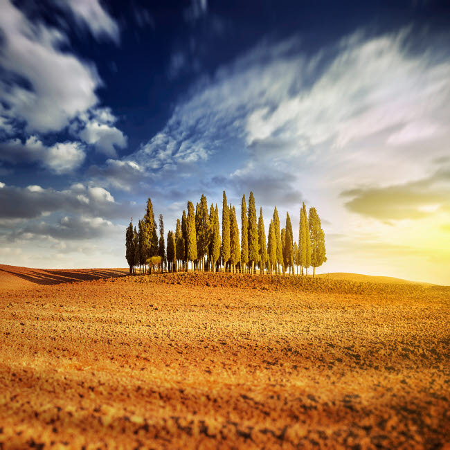 EVK200222S © Stocktrek Images, Inc. Sunset in a golden field with a row of cypress trees, Italy, Tuscany.
