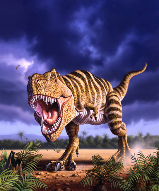 JRY600002P © Stocktrek Images, Inc. A Tyrannosaurus Rex attacks, lit by the late afternoon sun.