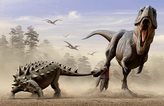 MHA600001P © Stocktrek Images, Inc. An Euoplocephalus hits T-Rex's foot by its mace like tail in self-defense.