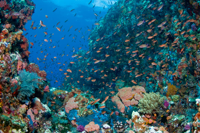 MME400166U © Stocktrek Images, Inc. Reef scene with corals and fish, Komodo, Indonesia.
