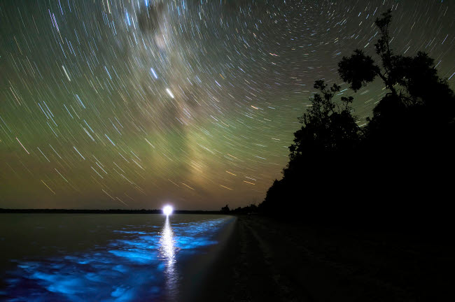 PHA100045S © Stocktrek Images, Inc. Star trails and bioluminescence, Gippsland Lakes, Australia.
