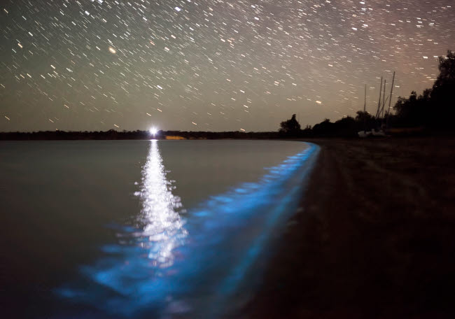 PHA100046S © Stocktrek Images, Inc. Star trails and bioluminescence, Gippsland Lakes, Australia.