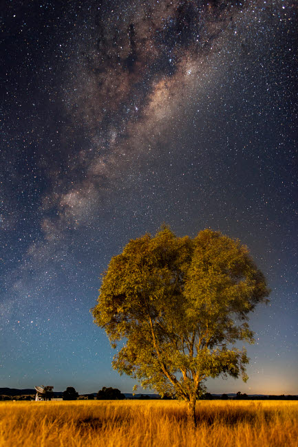PHA100047S © Stocktrek Images, Inc. Milky Way and tree in moonlight, Parkes, Australia.