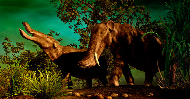 PHB600025P © Stocktrek Images, Inc. Platybelodon was a large herbivorous mammal that lived during the Miocene epoch.