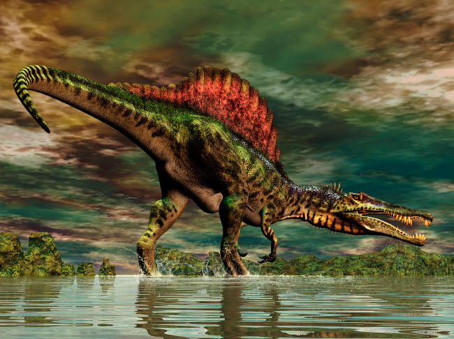 PHB600031P © Stocktrek Images, Inc. Spinosaurus was a large theropod dinosaur from the Cretaceous period.