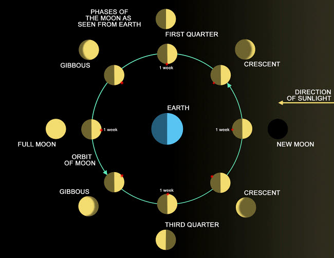 RMR100093S © Stocktrek Images, Inc. A diagram showing the phases of the Earth's moon.