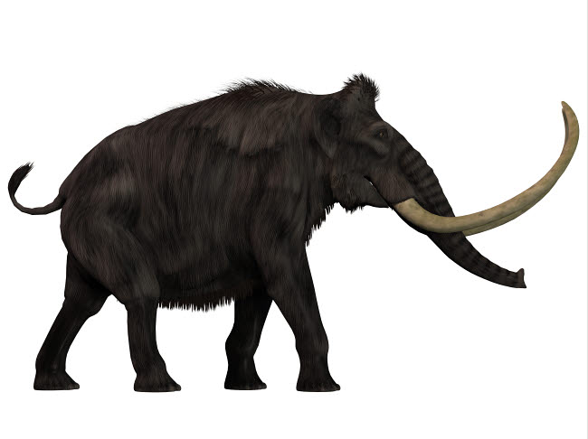 CFR200552P © Stocktrek Images, Inc. Woolly Mammoth, side view.
