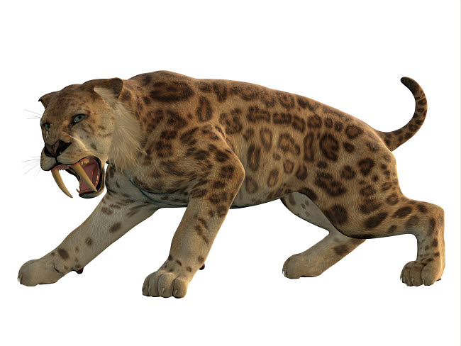 CFR200795P © Stocktrek Images, Inc. An angry saber-toothed tiger.