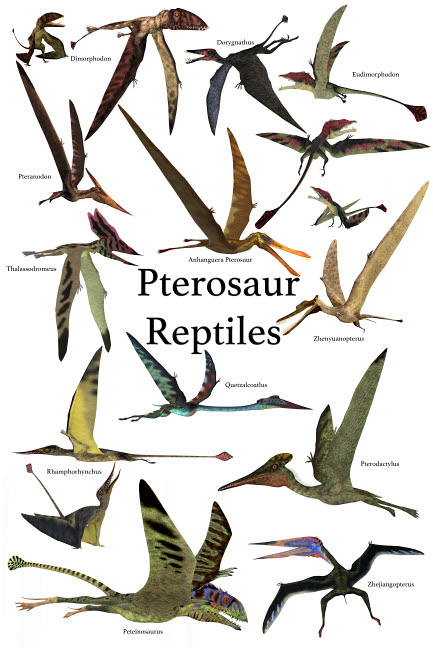 CFR200933P © Stocktrek Images, Inc. Poster of various flying pterosaur reptiles during the prehistoric age.