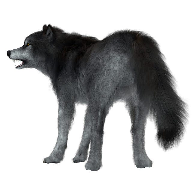 CFR601053P © Stocktrek Images, Inc. Dire wolf on white background, rear view.