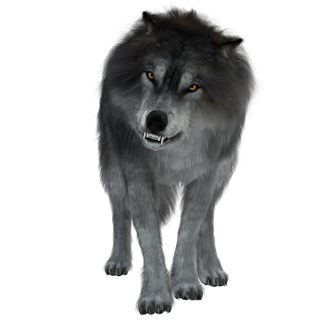 CFR601054P © Stocktrek Images, Inc. Dire wolf on white background, front view.