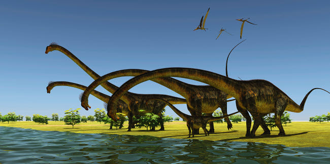 CFR601069P © Stocktrek Images, Inc. A herd of Barosaurus dinosaurs bend their long necks to drink from a river.