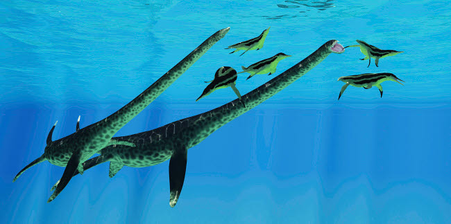 CFR601082P © Stocktrek Images, Inc. A pair of Styxosaurus attack a group of Dolichorhynchops plesiosaurs.