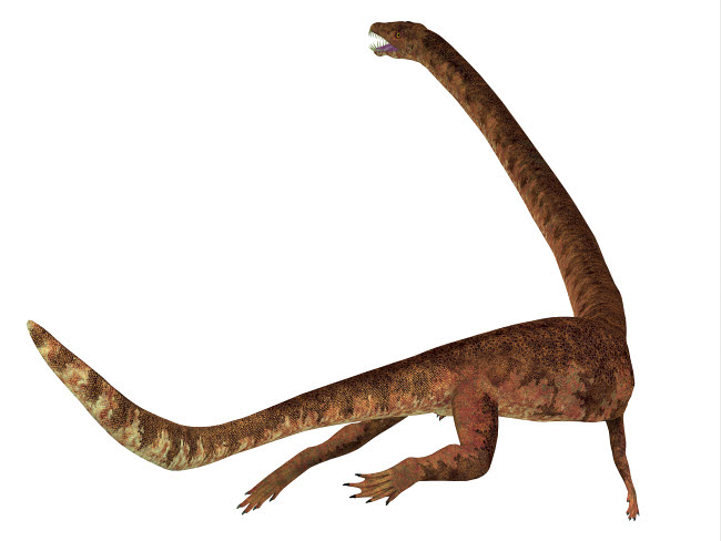 CFR601087P © Stocktrek Images, Inc. Tanystropheus dinosaur, rear view of tail.