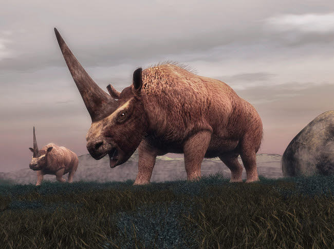 EDV600295P © Stocktrek Images, Inc. Elasmotherium dinosaurs grazing in the steppe grass.