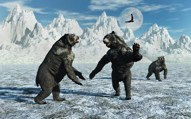 MAS600106P © Stocktrek Images, Inc. A pair of Arctodus Bears in a territorial dispute.