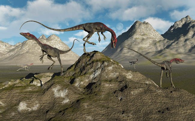 MAS600107P © Stocktrek Images, Inc. A pack of carnivorous Compsognathus dinosaurs.