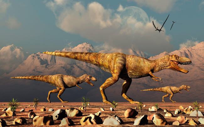 MAS600158P © Stocktrek Images, Inc. A pack of Tyrannosaurus rex dinosaurs hunting for food.