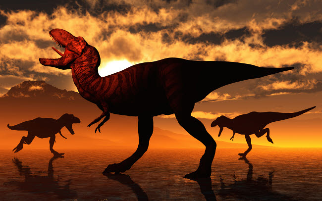 MAS600159P © Stocktrek Images, Inc. A pack of Tyrannosaurus rex dinosaurs hunting for food.