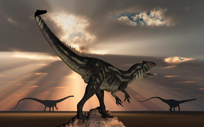 MAS600171P © Stocktrek Images, Inc. An Allosaurus watching a pair of large Diplodocus dinosaurs pass in the distance.