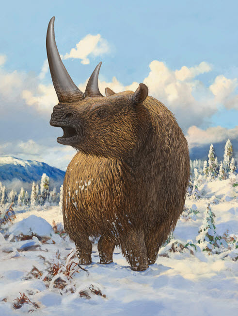 SKR100171P © Stocktrek Images, Inc. A woolly rhinoceros standing in the snow.