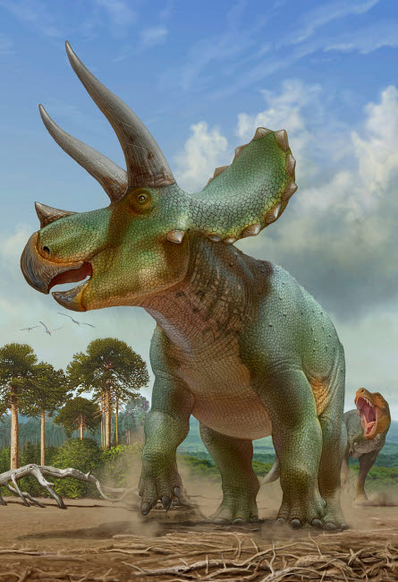 SKR100177P © Stocktrek Images, Inc. Triceratops running away from a T-rex chasing after it.