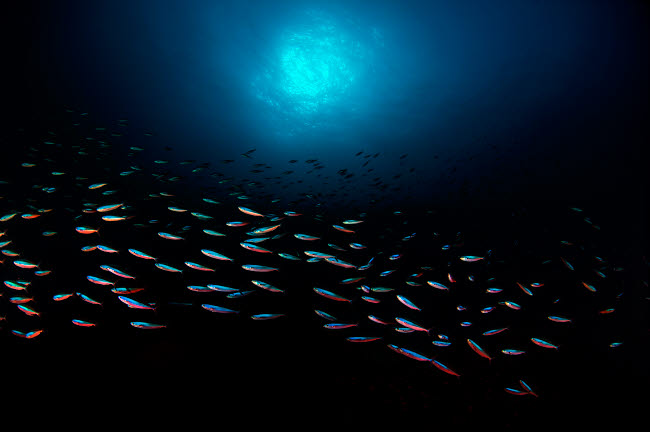 AAW400013U © Stocktrek Images, Inc. School of fish with sunburst in the background. Banda Sea, Indonesia.