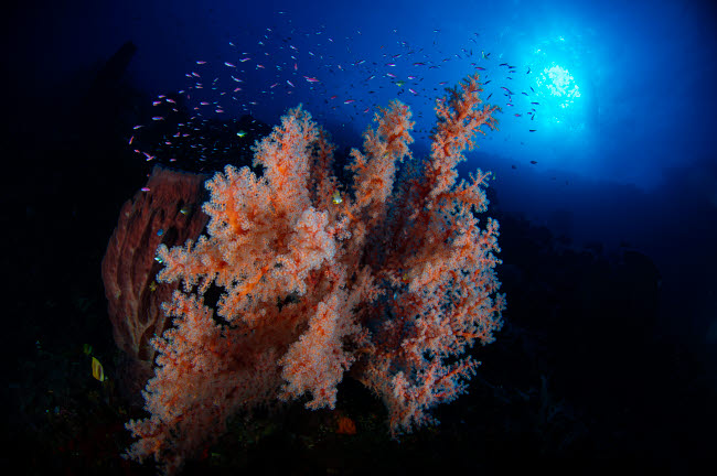 AAW400020U © Stocktrek Images, Inc. Colorful reef with fishes and sun burst in Komodo, Indonesia.