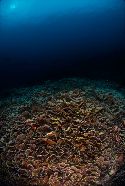 AAW400025U © Stocktrek Images, Inc. Reefscape with sunburst in the background in the Banda Sea, Indonesia.