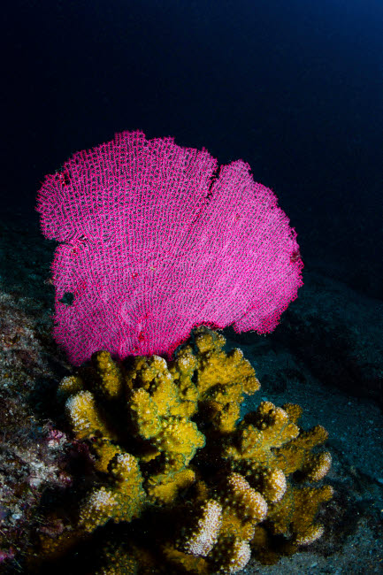 ACE400060U © Stocktrek Images, Inc. Hard and soft corals, Cabo Pulmo, Mexico.