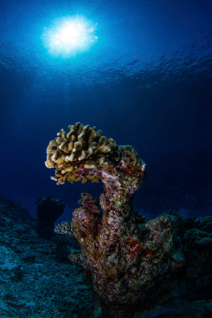 ACE400072U © Stocktrek Images, Inc. Hard coral, Maldives.