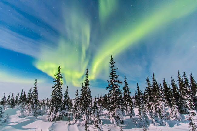 ADY200200S © Stocktrek Images, Inc. Aurora borealis over the trees in Churchill, Manitoba, Canada.