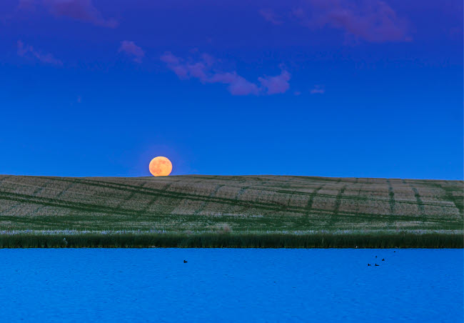 ADY200479S © Stocktrek Images, Inc. Rull moon rising over a prairie pond in Alberta, Canada.